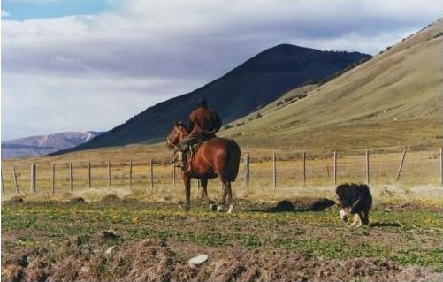 Puestero de una estancia cayó del caballo y deberá ser indemnizado por la ART