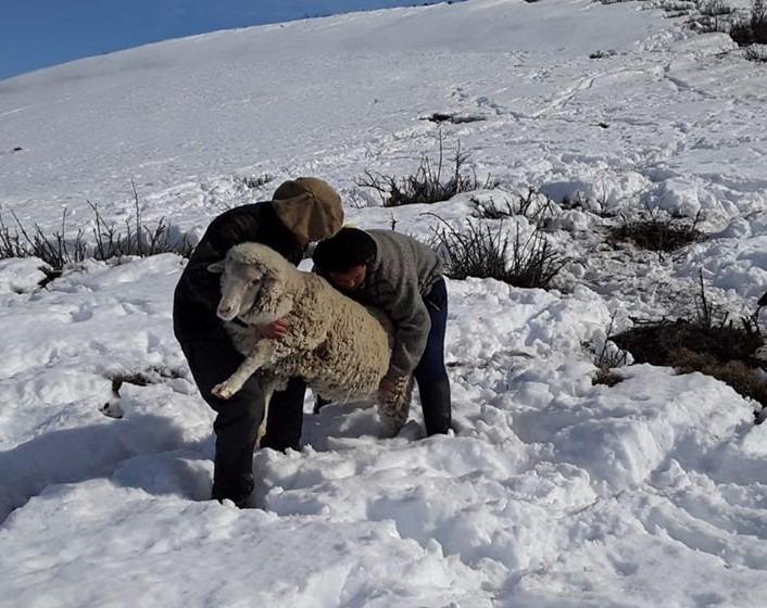 Piden que se exima del pago de créditos a los productores ovinos y caprinos de la Región Sur y Zona Andina